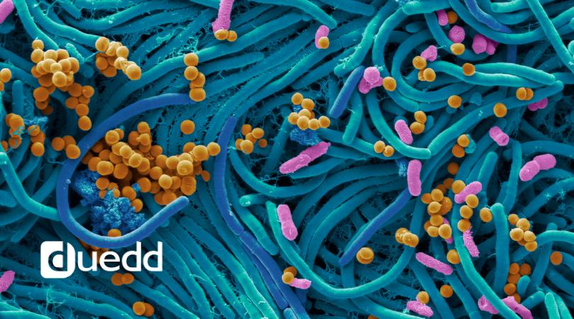 Il ruolo del microbiota intestinale e COVID-19